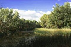 Teich stockbilder