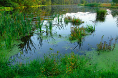 Teich Lizenzfreies Stockfoto