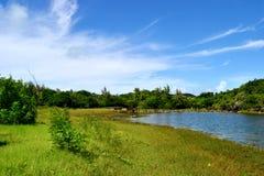 Teich Stockfoto