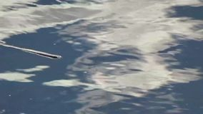 Teich, abstrakter Wolken-Reflexion Grandview-Nationalpark, WV stock footage
