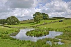 Teich auf einem Bauernhof Stockfotografie