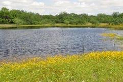 Teich auf einem Gebiet Lizenzfreie Stockfotografie