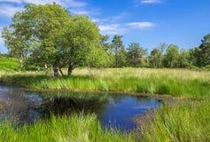 Teich bei Arne in der Dorset-Landschaft Lizenzfreie Stockfotografie