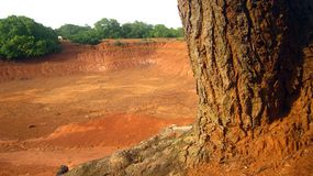 Teich-Blick durch Baum-Wurzeln Lizenzfreies Stockfoto
