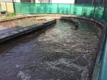 Teich der Abwasserbehandlung des Systems Stockbilder