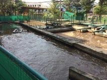 Teich der Abwasserbehandlung des Systems Stockfotos