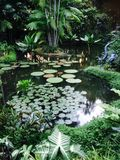 Teich der botanischen Gärten Stockbilder
