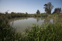 Teich in der Natur Stockbilder