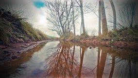 Teich in der Natur und in den Bäumen Pfad im Fallwald stock video footage