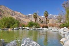Teich in der Wüste Lizenzfreie Stockfotos
