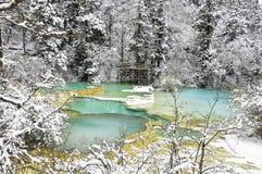Teich des blauen Grüns im Kiefernwald Stockfotos