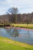 Teich in einem Park Stockbilder