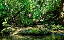 Teich in einem tropischen Wald Stockbilder