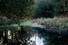 Teich in Epping-Wald Lizenzfreie Stockfotos