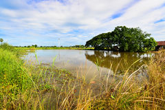 Teich für Gebrauch in der Landwirtschaft Stockfotografie