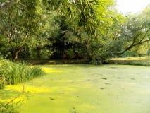 Teich in Forest Park Lizenzfreie Stockfotografie