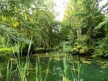 Teich in Forest Park Lizenzfreies Stockbild