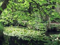 Teich in Foros-Park, Krim stockfotos