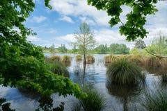 Teich gestaltet durch Bäume stockfotografie