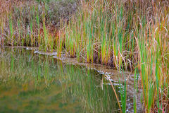 Teich-Gras-Reflexion Stockbild