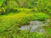 Teich im Dschungel Lizenzfreie Stockfotografie