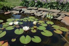 Teich im Garten Stockbild