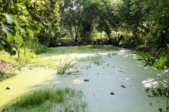 Teich im Garten Lizenzfreies Stockfoto