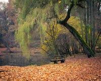 Teich im Herbstpark Lizenzfreie Stockfotografie