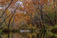 Teich im Holz Stockfotos