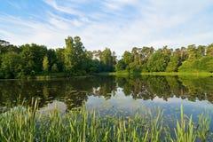 Teich im Holz Lizenzfreie Stockfotografie