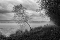 Teich im Nebel Lizenzfreies Stockfoto
