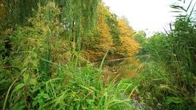 Teich im Park stock video footage
