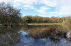 Teich im Rambouillet-Wald Stockbilder