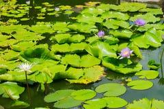 Teich im Sommer Lizenzfreies Stockbild