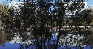 Teich im Stadtpark stock video footage