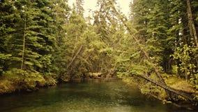 Teich im Wald Stockfoto