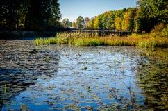 Teich-Leben Lizenzfreie Stockbilder
