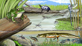 Teich-Leben lizenzfreie abbildung