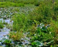 Teich mit Anlagen Stockfotos