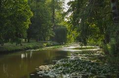 Teich mit Bäumen Stockfoto