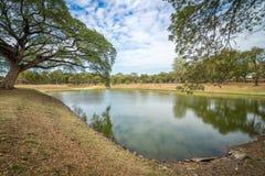 Teich mit enormen Bäumen mit der Reflexion stockbild