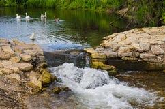 Teich mit Enten Lizenzfreies Stockfoto