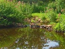 Teich mit Felsen-Verdammung Stockfotografie
