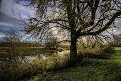 Teich mit hintergrundbeleuchtetem Baum Lizenzfreies Stockbild