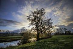 Teich mit hintergrundbeleuchtetem Baum Lizenzfreies Stockfoto