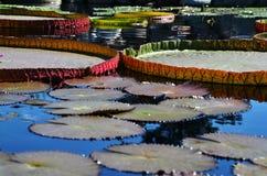 Teich mit Lilienauflagen stockbilder