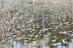 Teich mit Lilienauflagen stockfoto