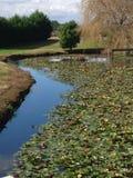 Teich mit Reflexionen Stockfoto