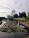 Teich mit Reflexionen Lizenzfreies Stockbild