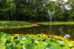 Teich mit Seerosen und Brunnen Stockfotografie
